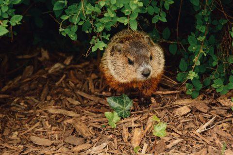 Émission 05 : La Marmotte