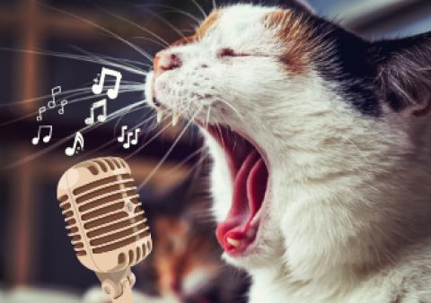Émission 09 : Je Chante !
